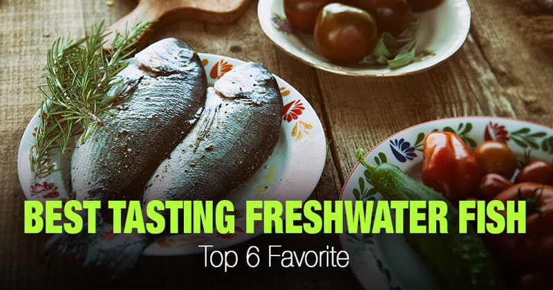 Best Tasting Freshwater Fish to Eat
