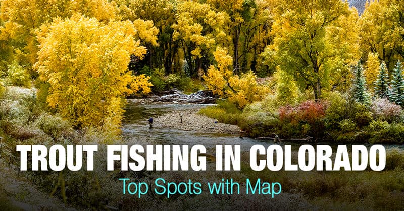 Trout Fishing in Colorado (CO)