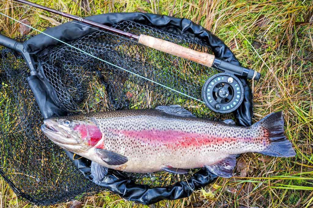 Best Tasting Freshwater Fish to Eat: Trout